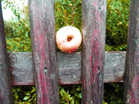Apfel-im-Kasten